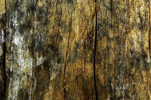 hongos madera